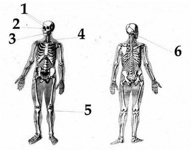 kolevatov-autopsy