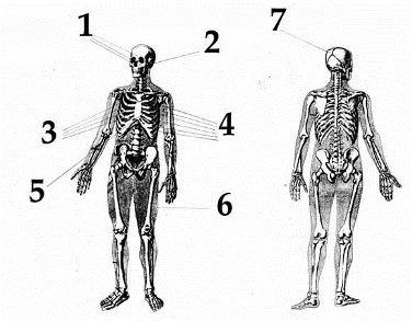 luda-autopsy