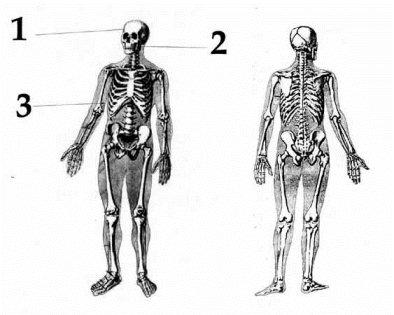 nicolai-autopsy